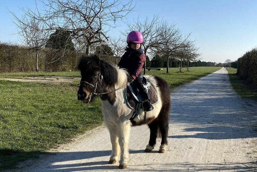 poney-foretsenart-ecurie-poneyclub-essonne-tigery-seineetmarne-pensioncheval-pensionponey-baladeponey-coursponey
